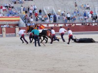 A Short History of Bullfighting in Spain