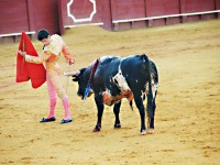 Where to Attend Bullfighting in Spain
